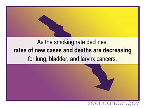 Rates of new cases and deaths from lung, bladder, and larynx cancers decrease along with the smoking rate.